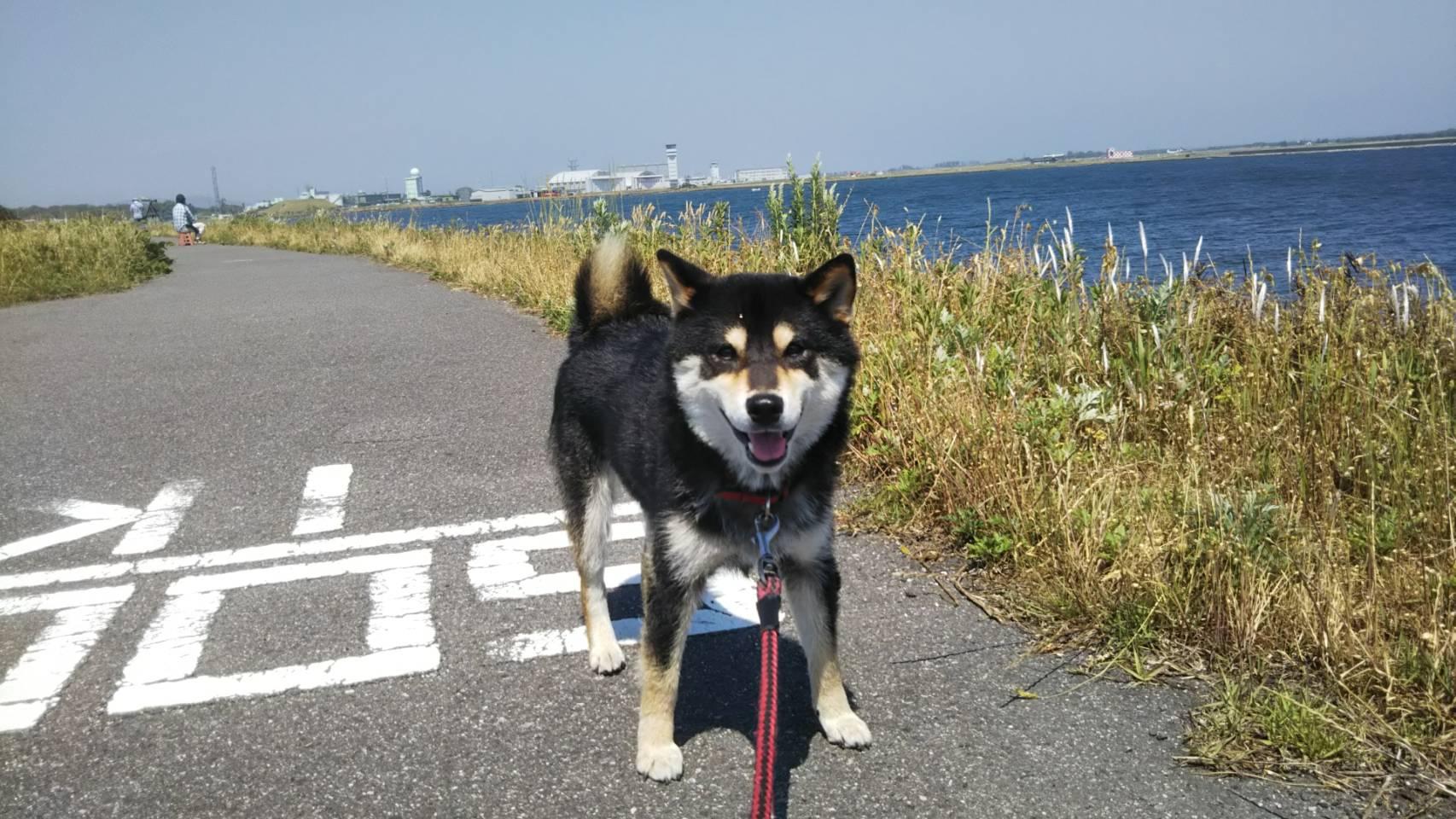 腹積もり』 | 鳥取県境港市 女子サッカーチーム